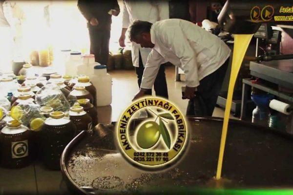 Akdeniz Zeytin Yağı Fabrikası – Sızma Zeytin Yağı Toptan Satışı Gazipaşa Alanya Manavgat